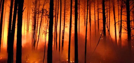 boschi devastati