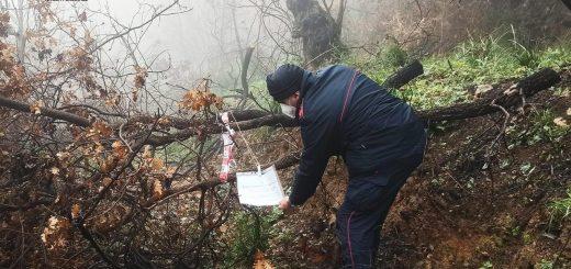 furto alberi legna